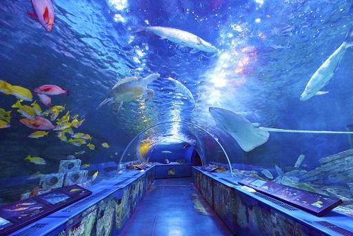 【水族館】あなたの好きな水族館はどこ?【人気投票実施中】 | ねとらぼ調査隊