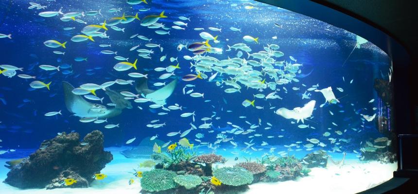 画像は「サンシャイン水族館」より引用