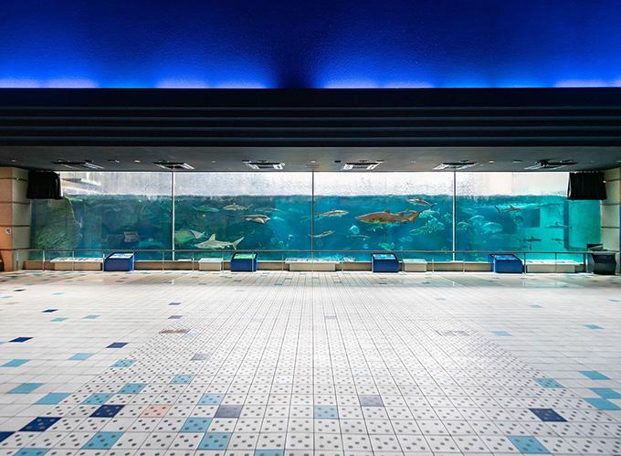 画像は「須磨海浜水族園」より引用