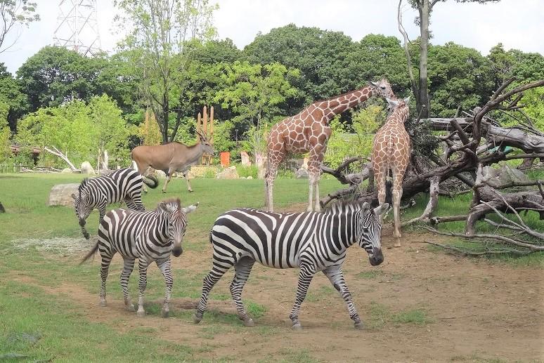 【動物園】あなたが最もおすすめしたい関東地方の「動物園」はどこ?【人気投票実施中】 | ねとらぼ調査隊