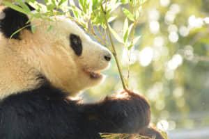 関東地方の「動物園」人気ランキングTOP27! 1位は「那須どうぶつ王国」に決定! 【2021最新】